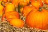Pumpkin Patch Fragrance Oil